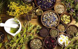 گیاهان دارویی موثر در تقویت حافظه